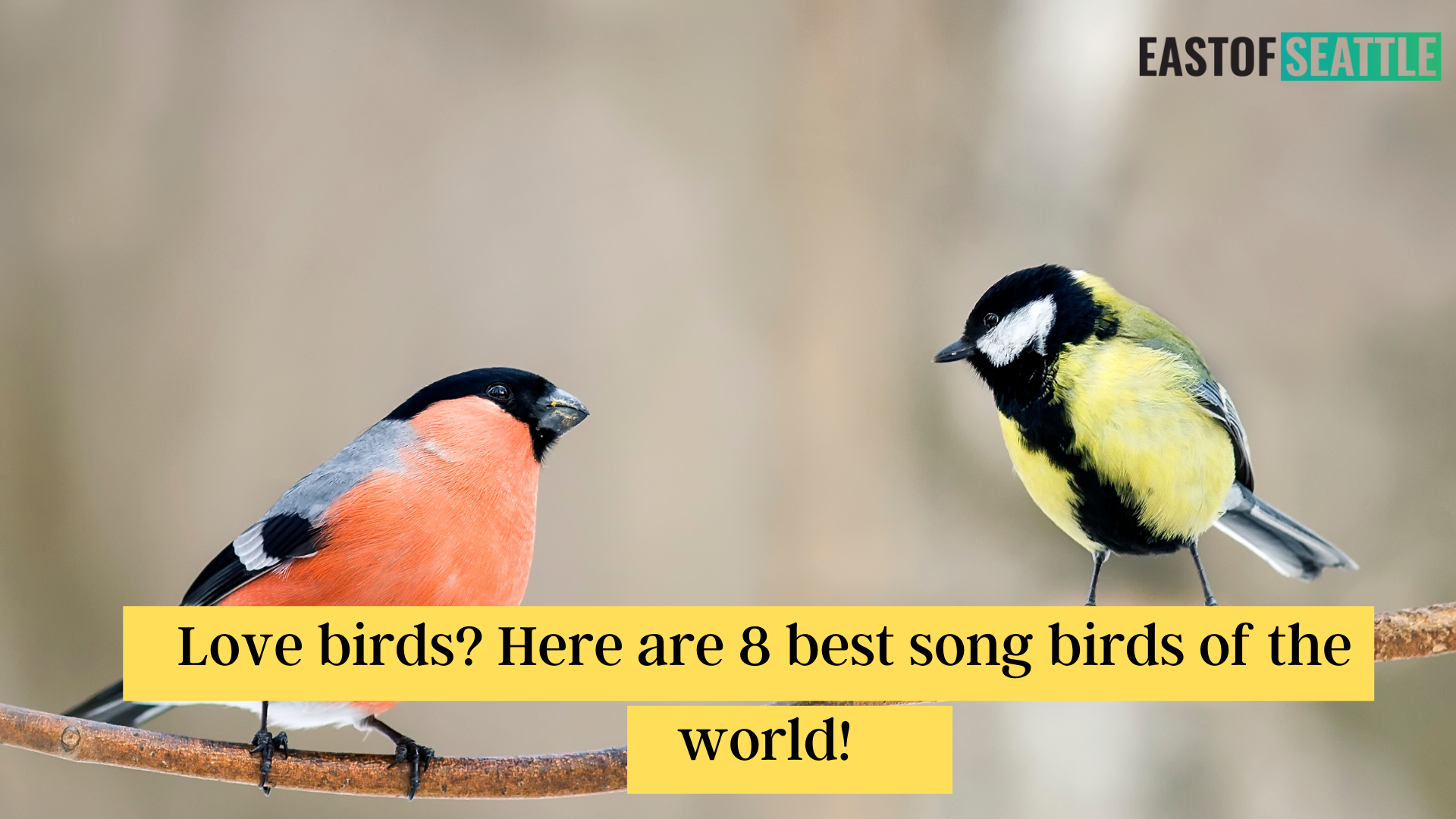 Love birds? Here are 8 best song birds of the world!